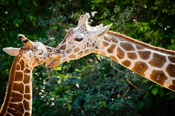 Greenville Zoo at South Carolina